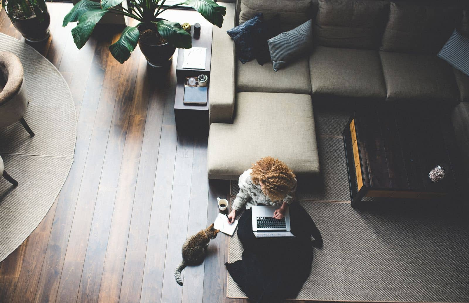Woman working from home in living room with cat