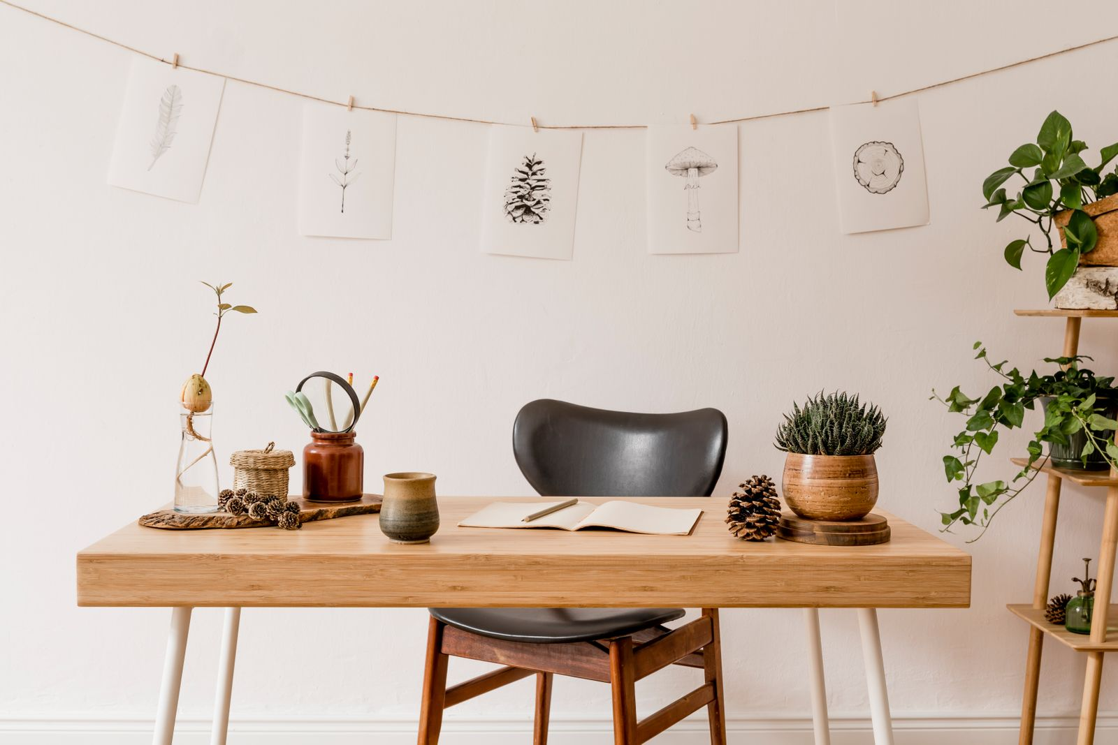 Desk with plants and nature drawings