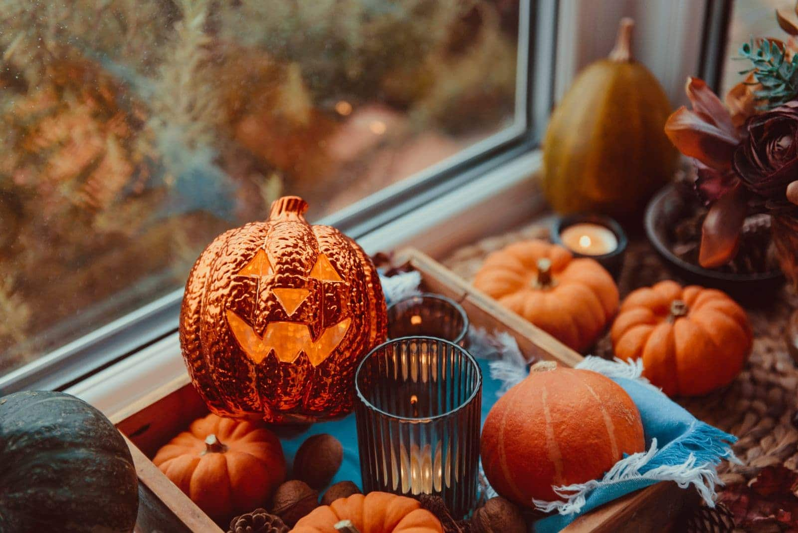 Decorative pumpkins in windowsill