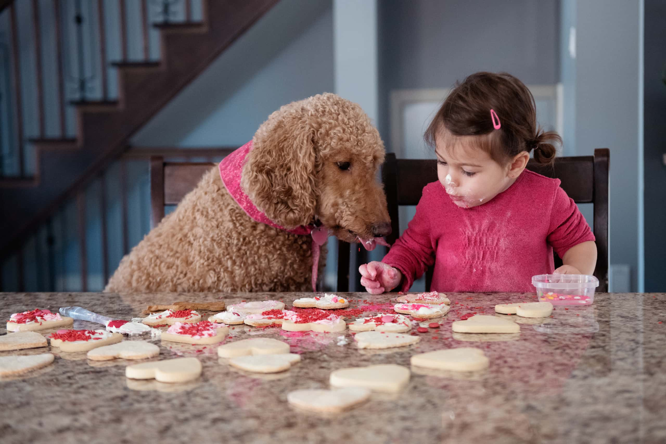 Valentine's day cookie decorating little girl